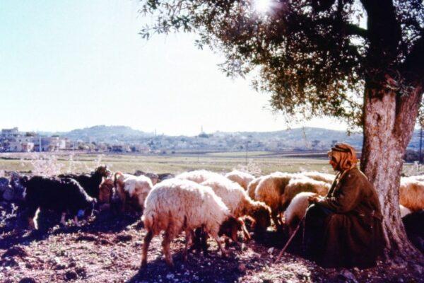 Jerusalem009_800_533